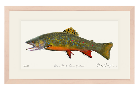 Beaver Pond Brook Trout