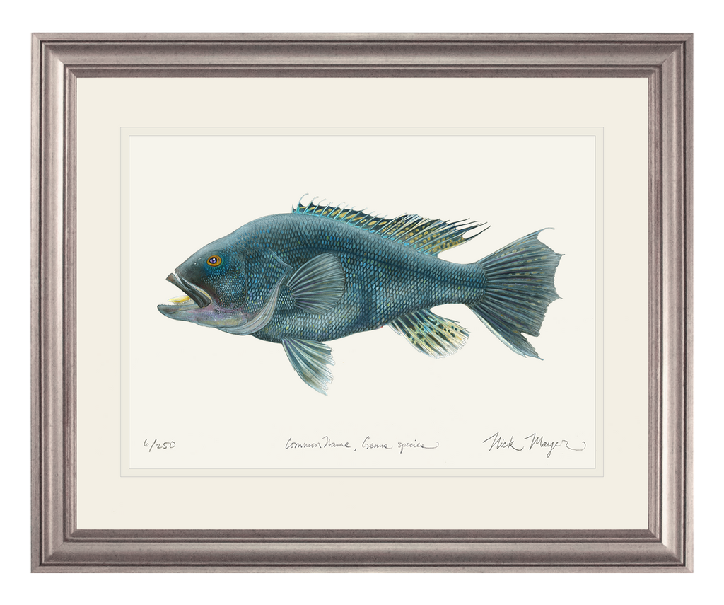 Black Sea Bass Original Watercolor Painting