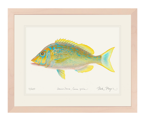 Blue Spangled Emperorfish Print