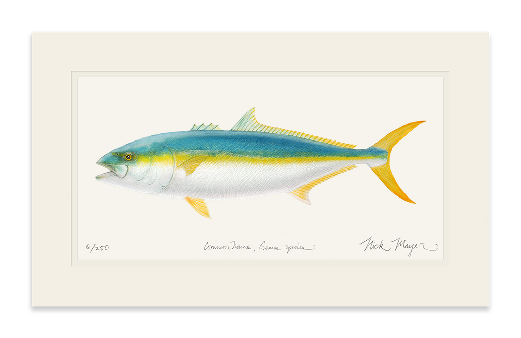 California Yellowtail 2