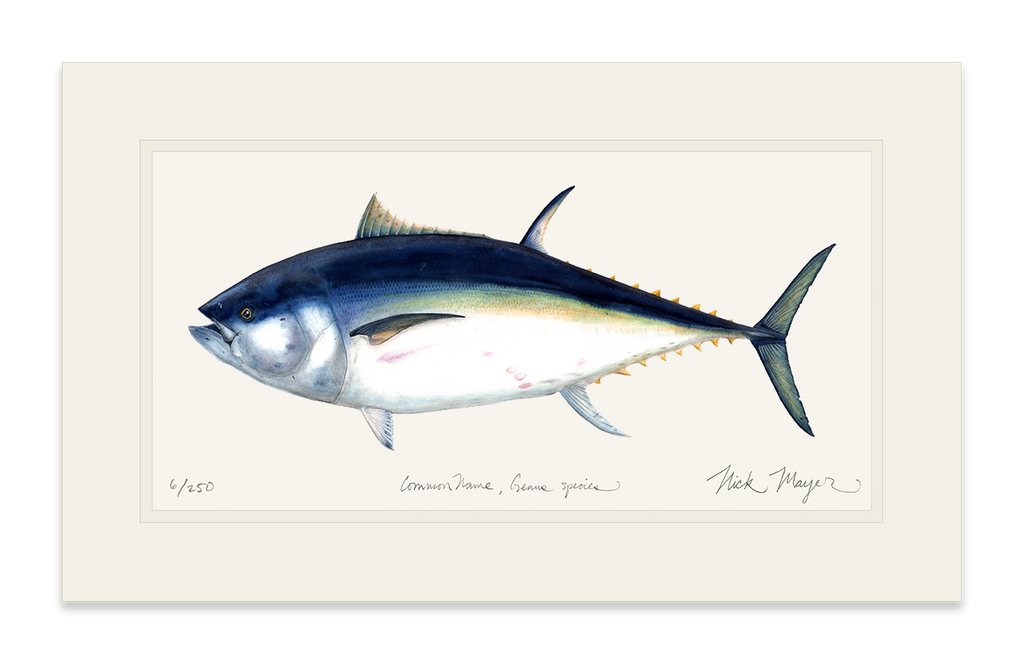 Giant Bluefin Tuna 1 Print