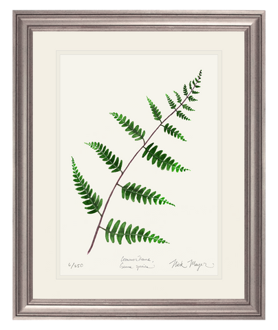 Goldie's Wood Fern Print