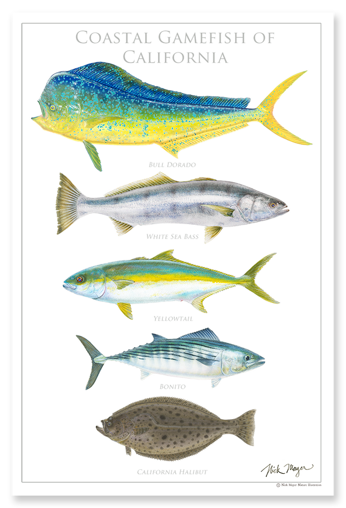 Coastal Gamefish of California