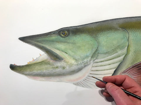 "Muskie, 50"" Original Watercolor Painting"