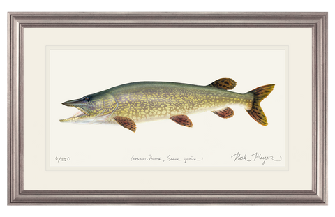 Northern Pike Original Watercolor Painting