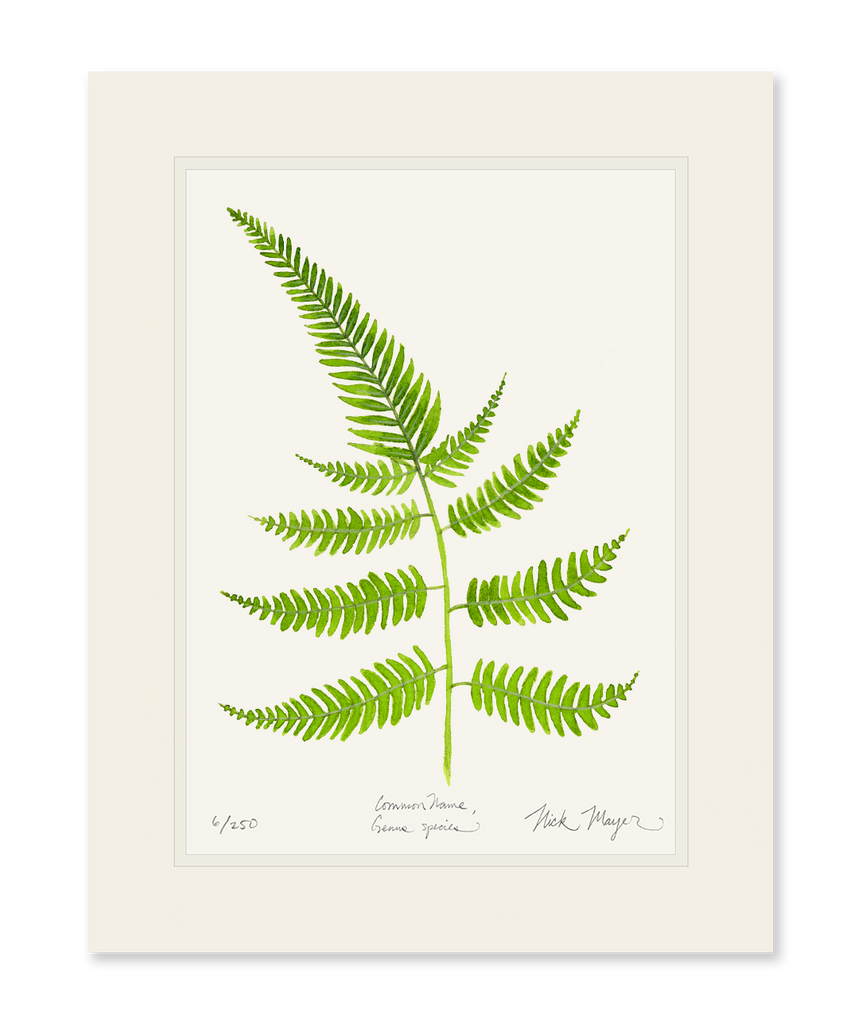 Painted Fern Print
