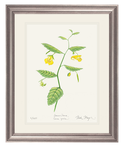 Pale Jewelweed Wildflower Print