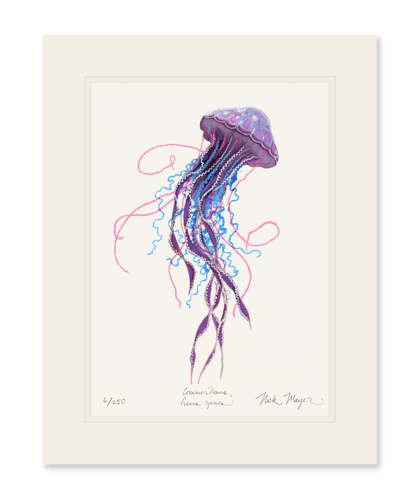 Purple Jellyfish II