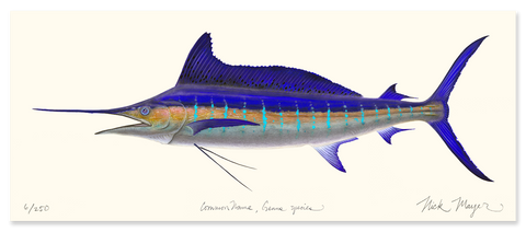 Striped Marlin Masterwork Canvas