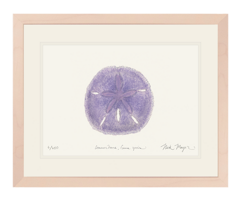 Purple Sand Dollar