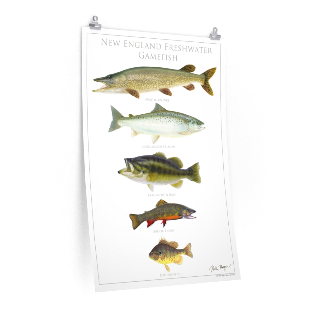 New England Freshwater Gamefish Poster