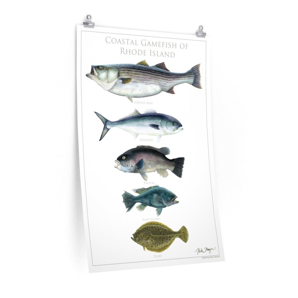 Coastal Gamefish of Rhode Island Poster