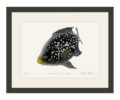 Starry Night Cichlid 2