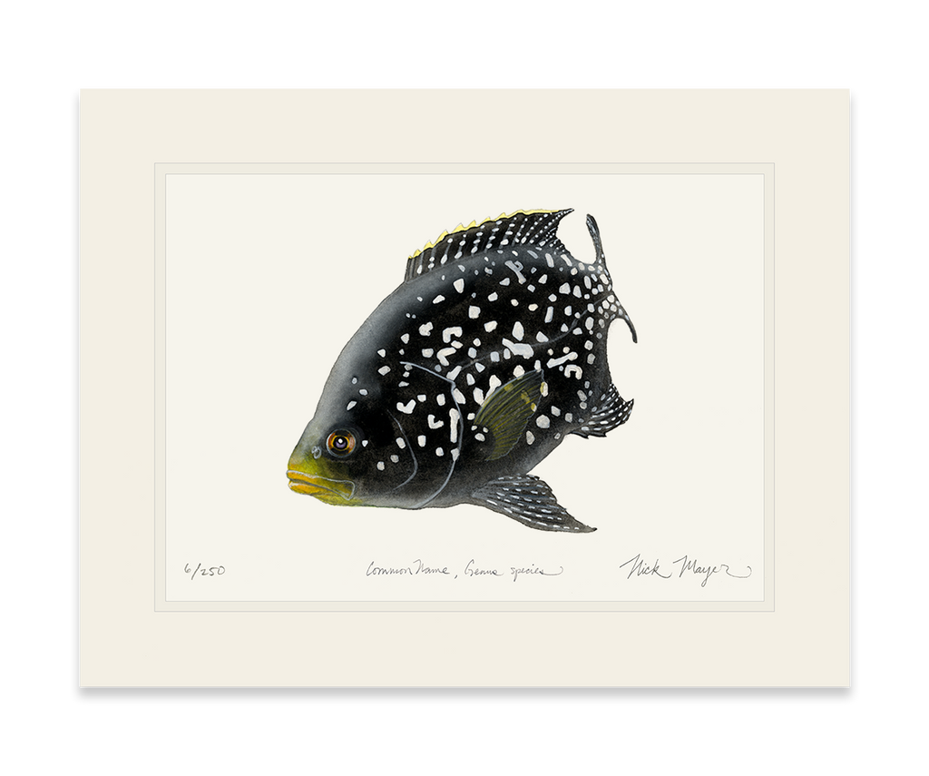 Starry Night Cichlid 2 unframed