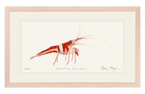 Harlequin_Shrimp_painting