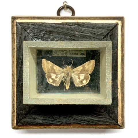 Bourbon Barrel Frame with Moth from 18th Century Collector's Cabinet