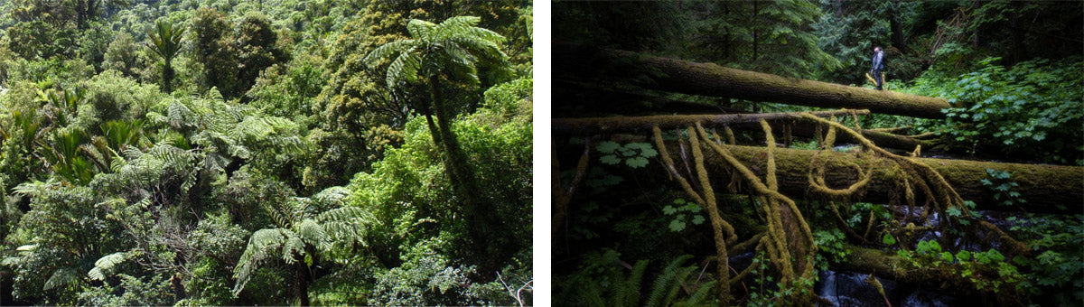 Forest Regeneration Projects