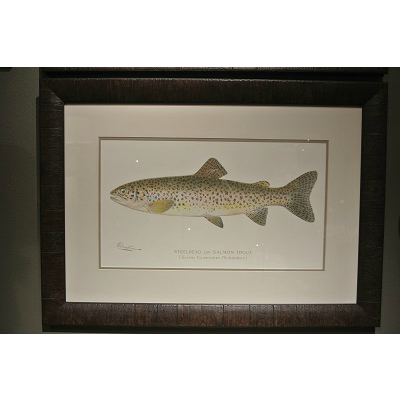 STEELHEAD TROUT FRAMED ART