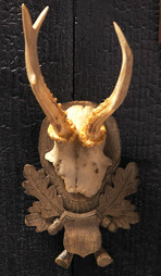 HUNT CLUB TROPHY HEAD