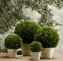 BOXWOOD TOPIARY BALL 12""