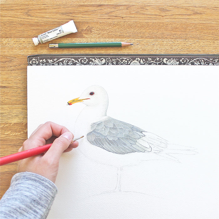 Seagull watercolor painting in progress