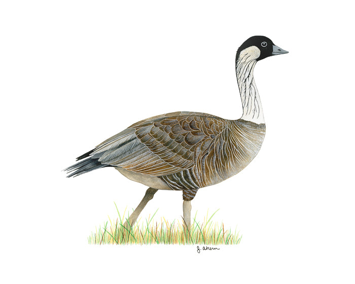 The Nene, also known as the Hawaiian Goose