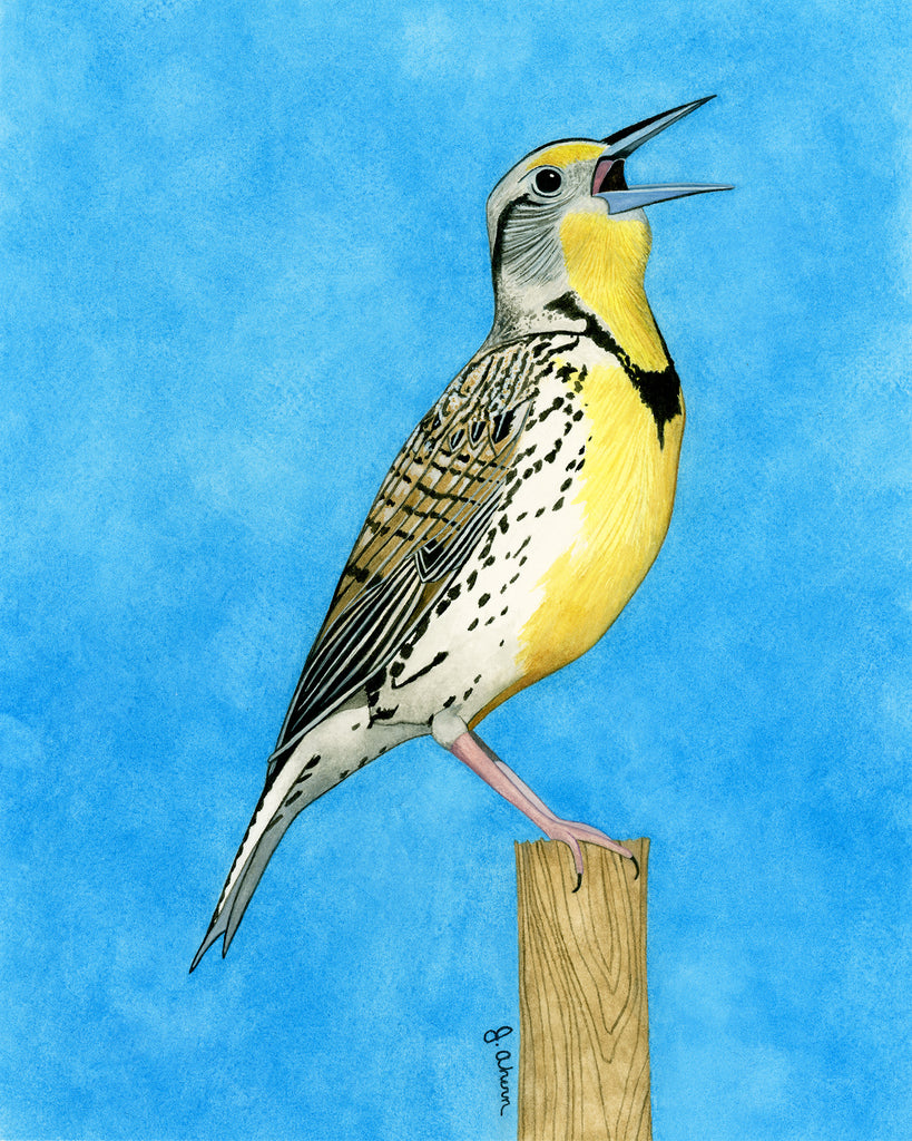 Western Meadowlark original watercolor bird painting