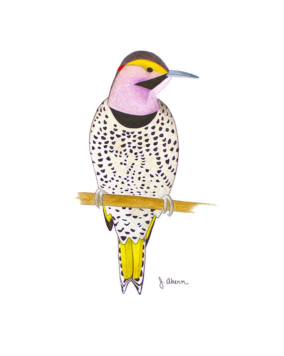 Alabama state bird art