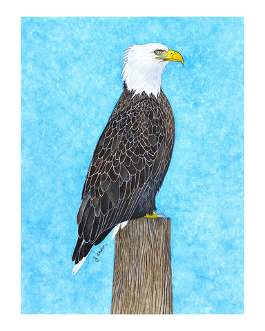 Bald Eagle watercolor painting print