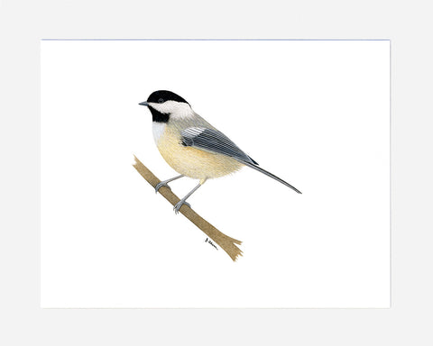 Black-Capped Chickadee watercolor print