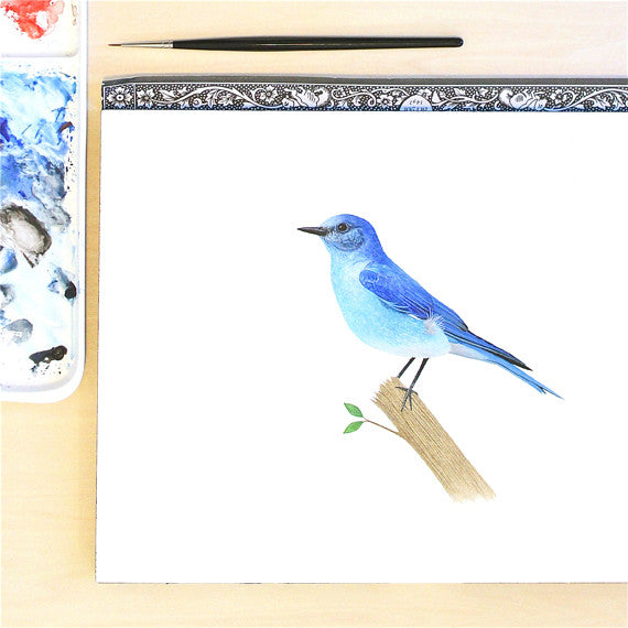 Mountain Bluebird painting