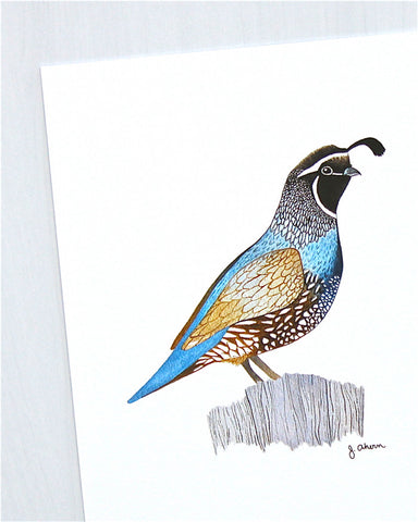 California Quail print close up