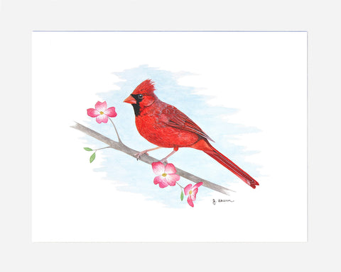 Cardinal on Dogwood Branch watercolor painting print