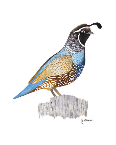 California Quail watercolor painting