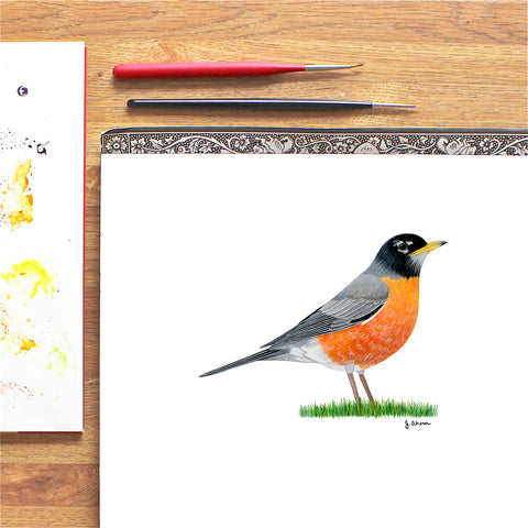 American Robin Watercolor Art