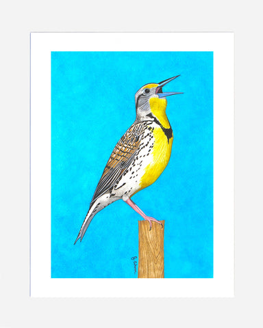 Western Meadowlark watercolor bird print