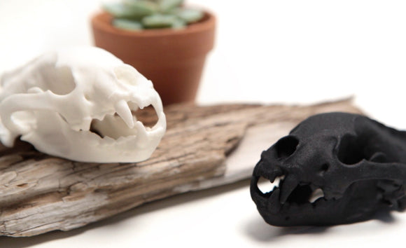 3D Printed Desktop Display Skulls