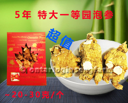 5年 特大一等园泡参 227克/ 5 Year Large High Quality Round-Block Ginseng 227g