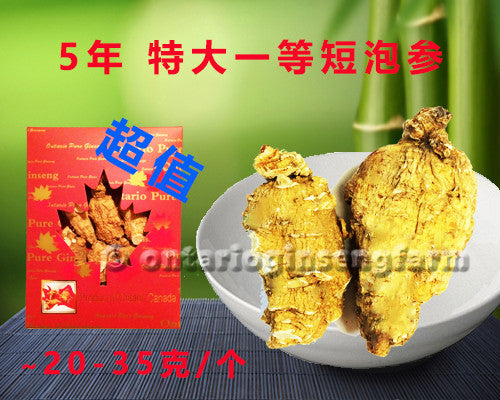 5年 特大一等短泡参 227克/ 5 Year Large High Quality Short-Block Ginseng 227g