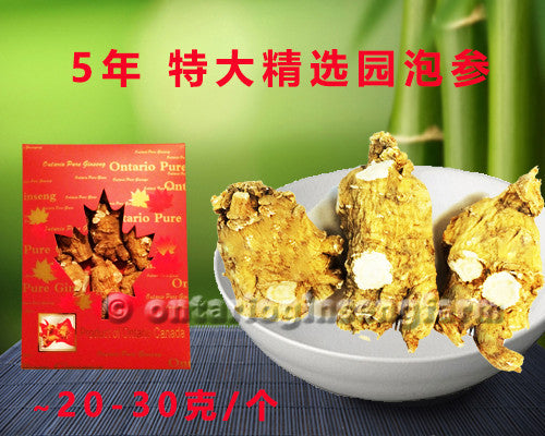 5年 特大精选园泡参 150克/ 5 Year Large High Quality Round-Block Ginseng 150g