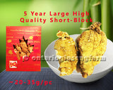 5年 特大精选短泡参 150克/ 5 Year Large High Quality Short-Block Ginseng 150g