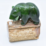 Jade bear on maple tree fossil 加拿大碧玉北极熊在枫木化石上