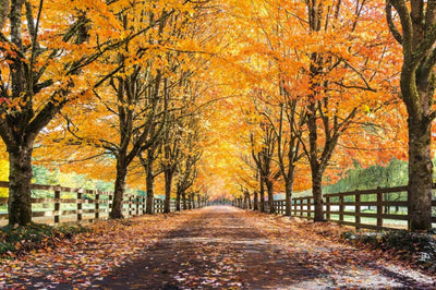 Fall Has Arrived! Interesting Facts About Trees During the Fall