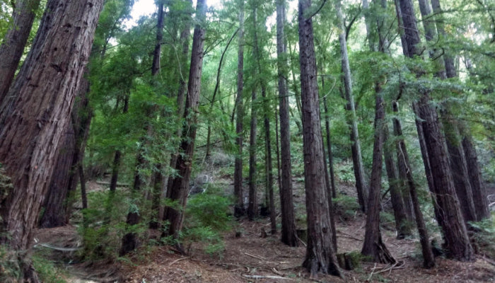 indian trees preserve ashes scattering