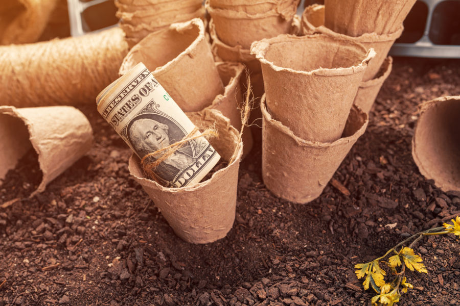 biodegradable urn cost