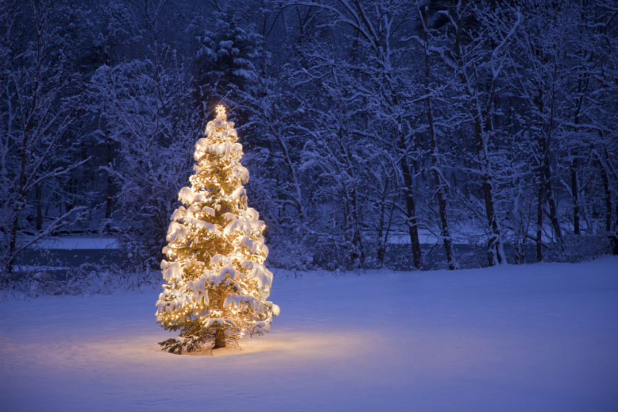 christmas tree meaning