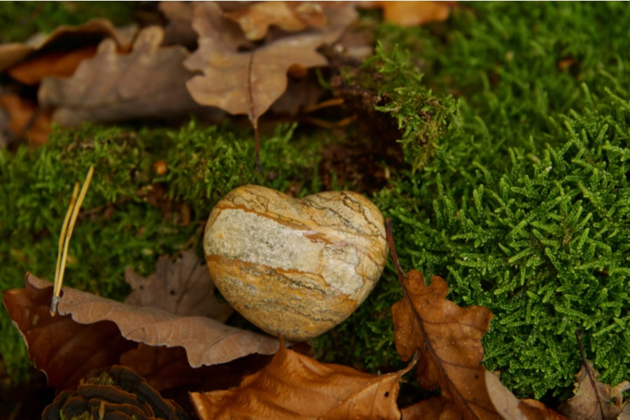 a rock amongst leaves to show a green funera