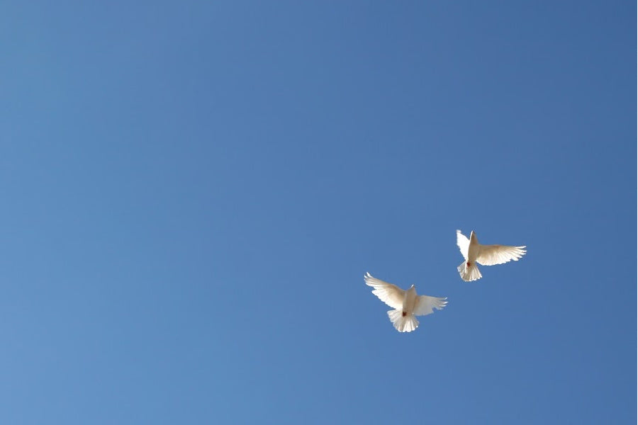 release doves at a memorial