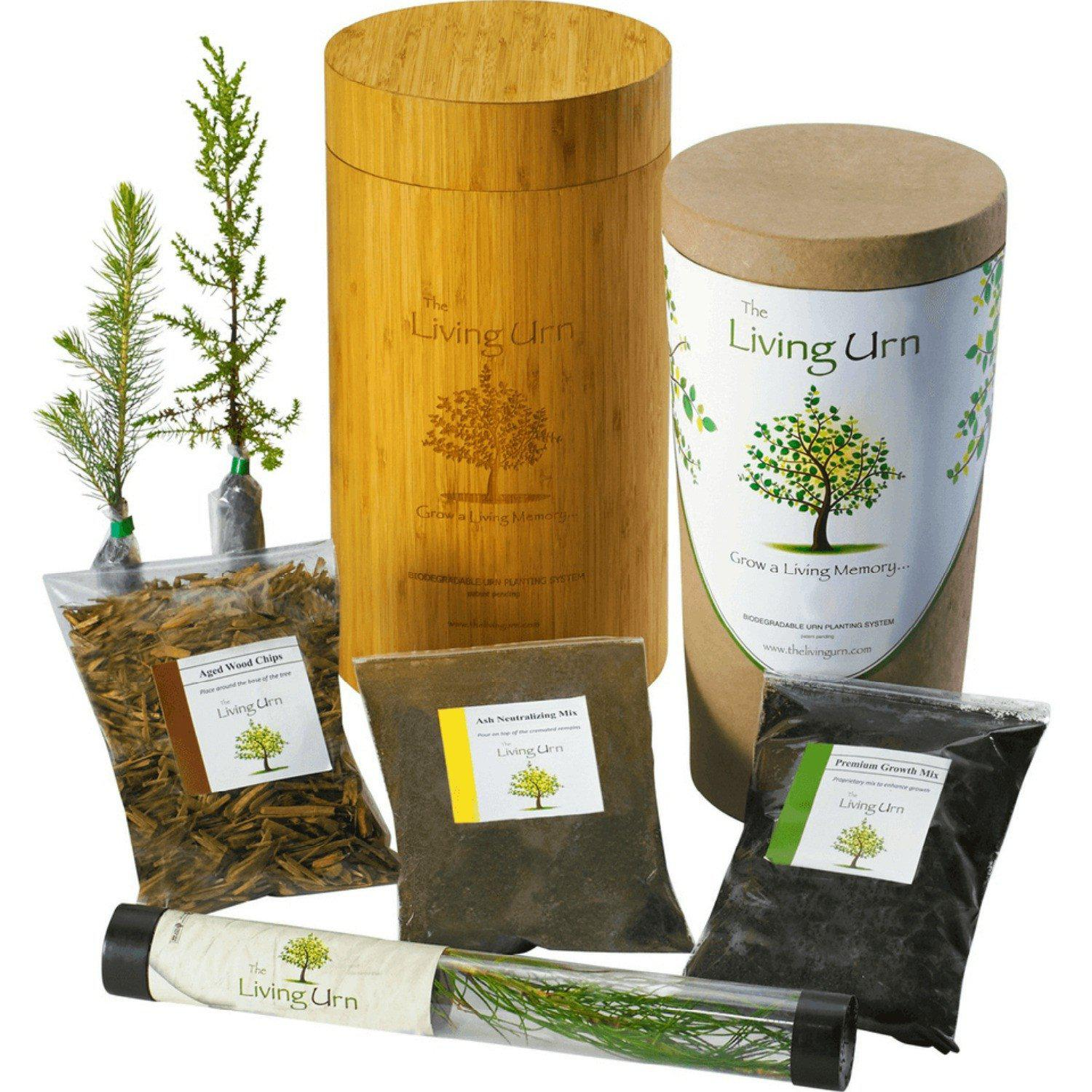 Black Hills Spruce - The Living Urn