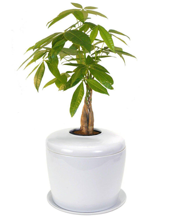 The Living Urn Indoors / Patio for Pets